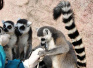 野生动物世界对园内动物体检 确保能健康过冬