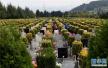 淄博市首家城市公益性公墓建成 正式开始预售