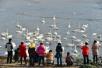 """泡温泉赏天鹅吃海鲜大餐 冬日的威海也可以很""""暖""""!"""