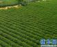 休闲农业和乡村旅游示范县(市、区)名单 河南俩县上榜