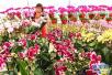 青州:鲜花展销迎新年