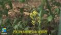 德州女博士的生态循环农业经:西红柿大棚里养蚯蚓