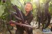 淄博市级以上农业龙头企业达185家