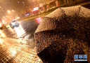 2018年首场小雪降临上海