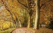 植树节|听说你们学校的校树是枣林?