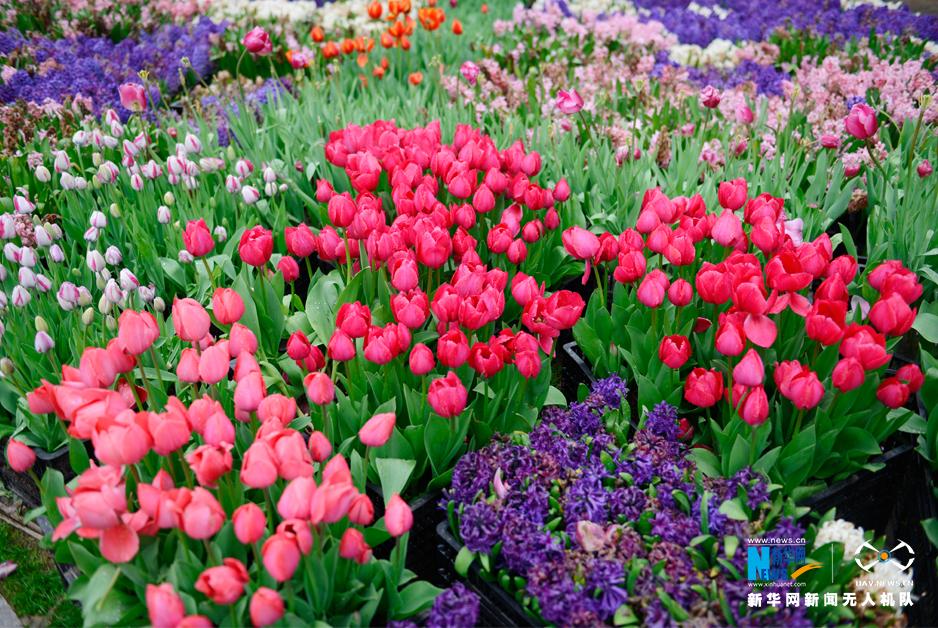 武汉植物园迎来最美赏花季 40多个花色姹紫嫣红