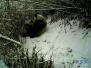 """""""滚滚""""又来了!看熊猫妈妈如何给幼崽喂奶"""