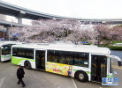 沧州老年免费公交卡该如何办理 有什么条件?