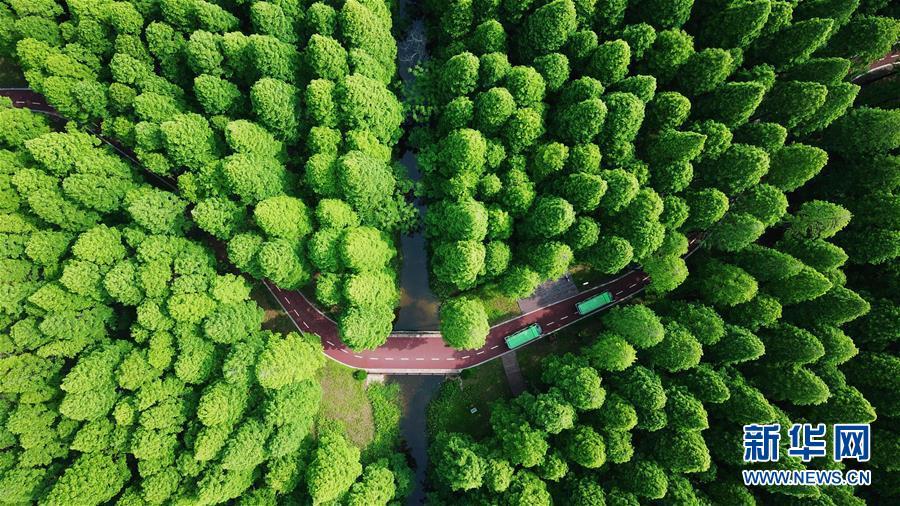 #(生态)(1)江苏黄海国家森林公园美如画