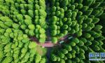 森林公园美如画