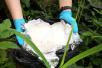 宁波警方连续破获3起毒品大案,缴获冰毒、麻古共约四千克