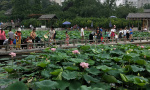 郑州市紫荆山公园荷花开了 还有埃及蓝睡莲