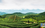 廊坊:树种结构优化 林业增绿增效