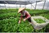 北京新发地菜价整体平稳 苦瓜、丝瓜等个别蔬菜涨价