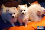 人犬矛盾关键在人 城市住宅小区该如何养犬?