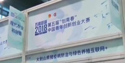 """第五届""""创青春""""中国青年创新创业大赛开赛 提供交流平台 助力青年创新创业"""