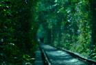 废弃铁路变爱情隧道