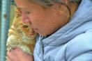 退休公务员倾心救助流浪猫狗 小院将被拆
