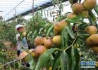 河北专家提醒:高温多雨注意防治蔬菜病虫害