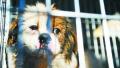 疯狂咬人的白狗逮着了 专家:咬人的白狗活不长