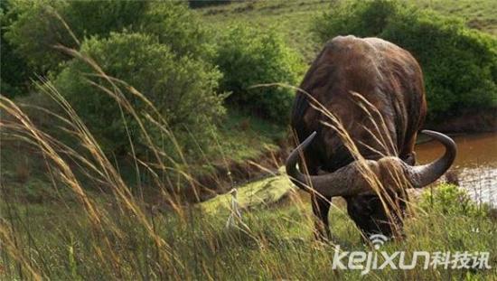 全球十大危险动物 世界上你不知道的狠毒动物