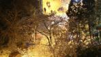 武汉大学夜樱浪漫如诗画 游人错峰邂逅樱花雨