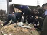 宁波镇海:运沙货车侧翻压住小车,众人徒手扒沙救出被困者