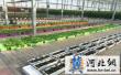 富硒蔬菜助力饶阳蔬菜产业提质增效(图)