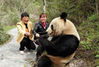 陕西现野生大熊猫