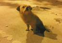 深夜开车十几公里 济南一只流浪狗为何惊动百余名网友