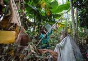 9岁女孩东莞卖菜寻亲 父母于汶川地震失联