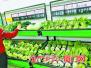 厦门未受低温降雨天气影响 多种蔬菜每斤一两元