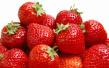 3月石市草莓采摘好去处