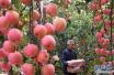 吃烂了一块的苹果真的会致癌吗?