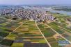 色彩斑谰 线条优美的锦绣田园