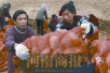 河南太康一农民5万斤蔬菜滞销  有爱心企业直接买光