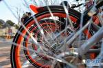 石家庄:500多辆共享单车乱停乱放影响市容被暂扣