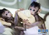 克隆猴研究伦理规范不可或缺