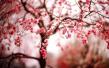 烟花三月一起去看花花世界 郑州及周边最美赏花路线图来了