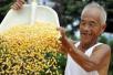 吉林全省收购粮食288亿公斤 入库玉米已超商品量八成