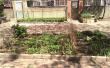 现实版种菜让人很无奈 公共绿地变私家菜园