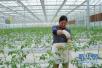 五大重點工程!山東農業脫貧攻堅三年行動方案來了