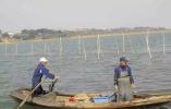 太湖围网清拆调查 螃蟹养到太湖里,没想到代价这么大