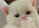 天生无辜脸的小奶猫