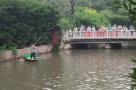 可惜!郑州人民公园青年湖里大量鱼儿莫名死亡
