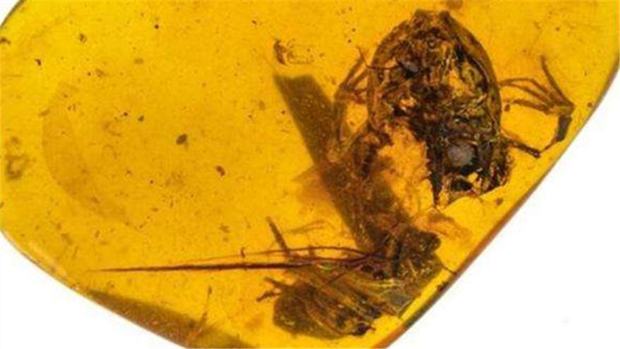 北京 琥珀中发现一亿年前古蛙类