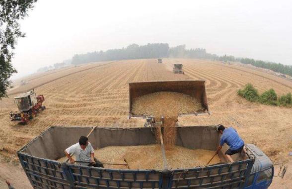 河南夏粮总产量722.74亿斤 再次位居全国第一