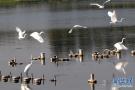 秋湖湿地公园白鹭翩跹 成观鸟赏景的好去处