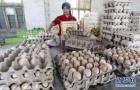 盘点8月下旬主要食品价格 鸡蛋价格有所回落