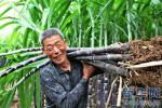 唐山:确保全市粮食质量安全与市场稳定